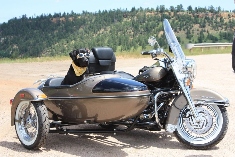 dog sidecar