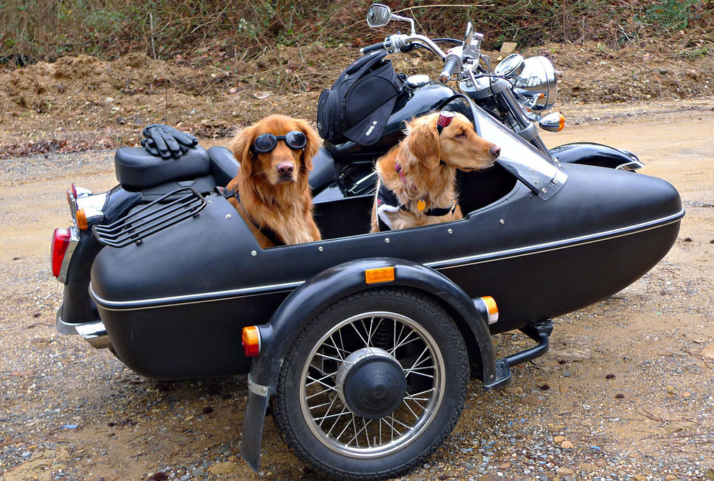 Top 10: What dogs and bikes have in common | Beantown Baggers